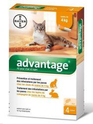 Advantage 40 Spot-on ampulla -  macska/nyúl 4kg-ig 4db ampulla